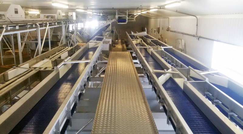 1214-conveyor-for-fish-industry